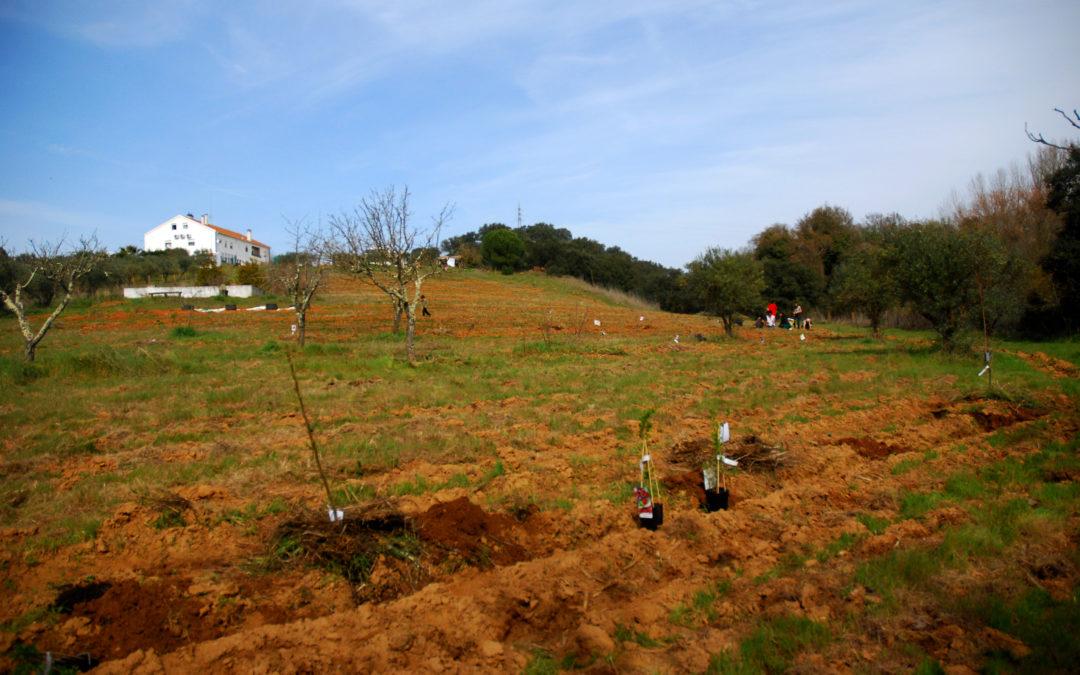 Horta dos Agoras Montemor-o-Novo